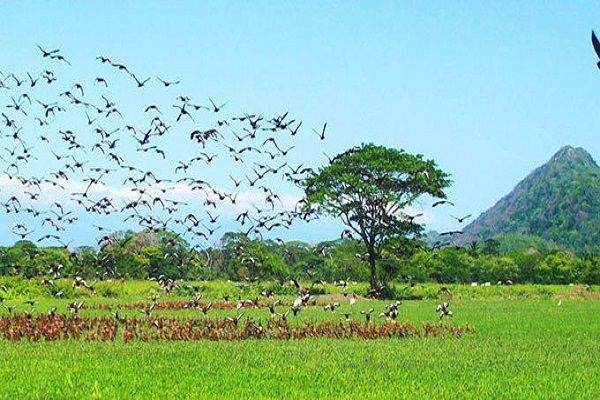 National Parks Palo Verde, Guanacaste