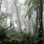 La Amistad International Parks, Costa Rica
