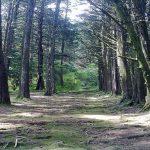 Bosque de la Hoja, Heredia
