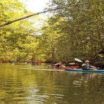 Unique mangrove kayak tour in Manuel Antonio